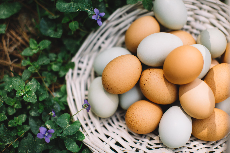 De onde vem o que eu como: além da alimentação, ovo é matéria-prima para a produção de vacinas